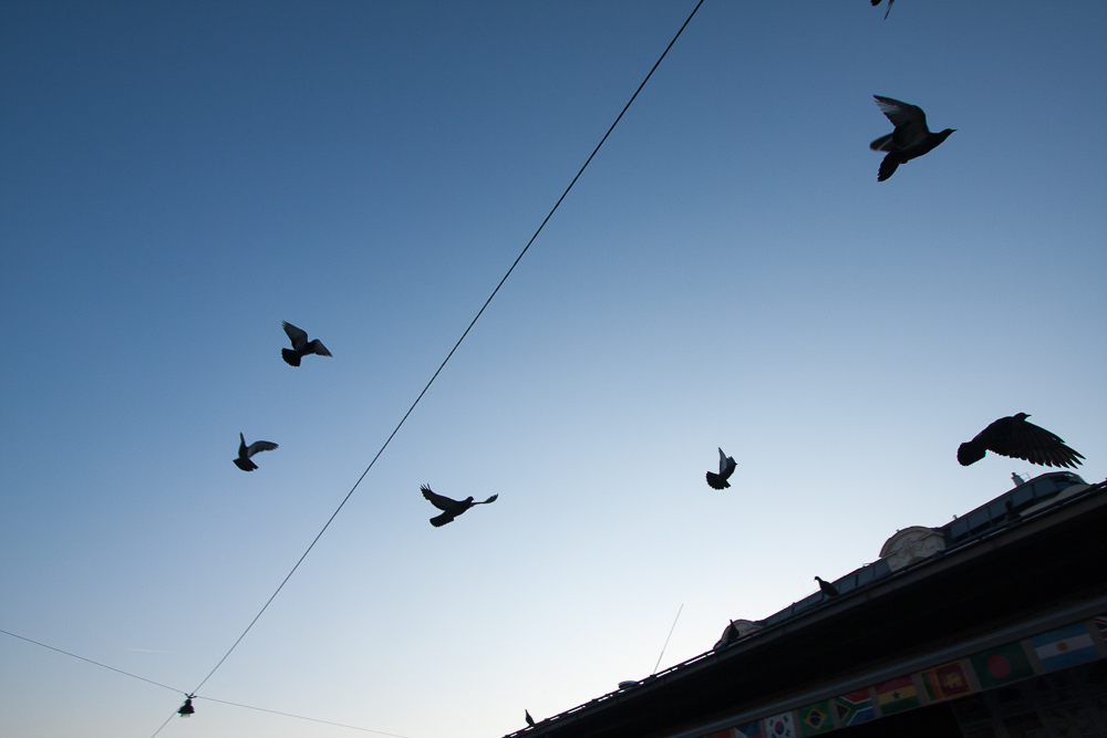 Pigeons of the NachtMarkt