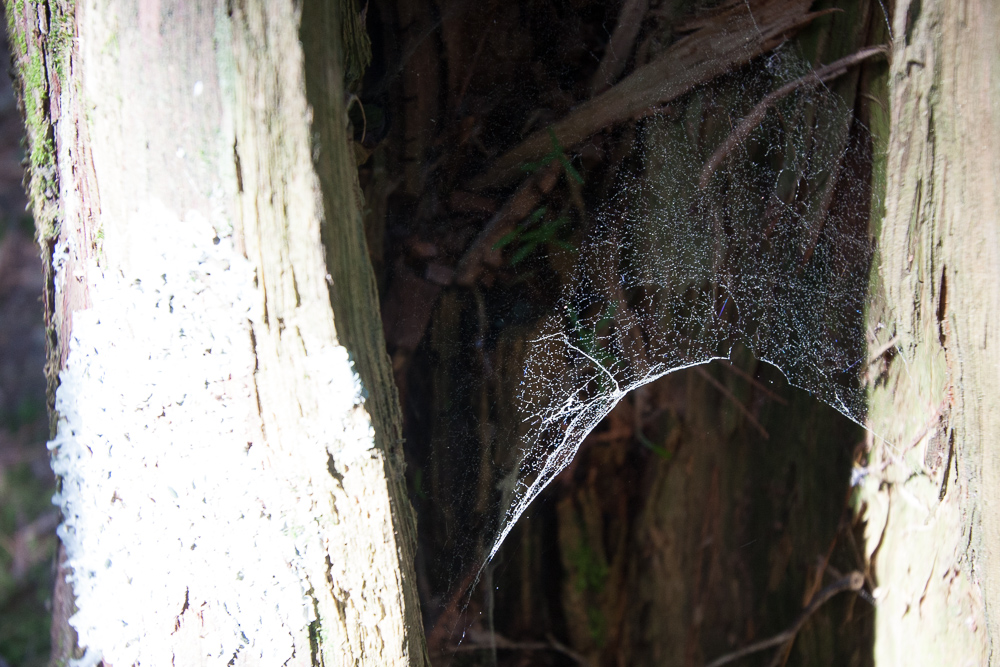 Webs and old Wood
