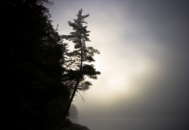 Aubrey Lake Tree in Fog