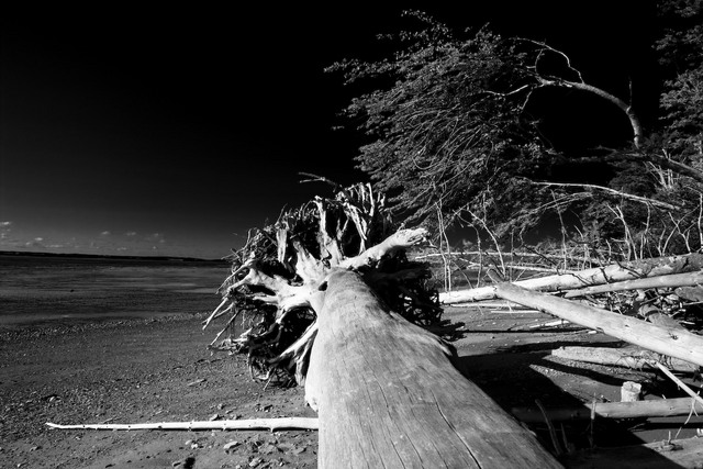 Driftwood on Fundy Bay