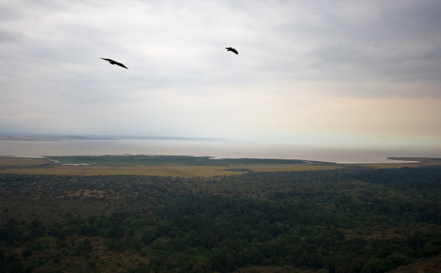 Hawks over Lake Manyara
