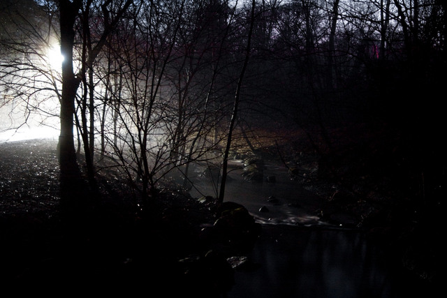 High Park Night Fog 1