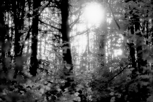 IR Sun through Trees