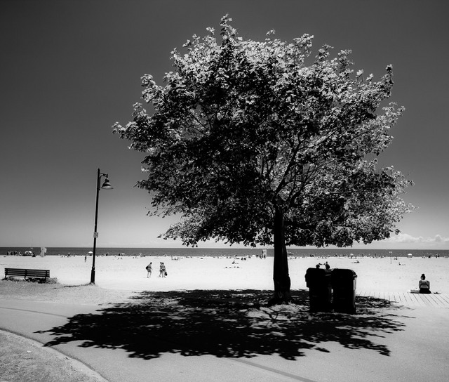 Kew Beach Tree