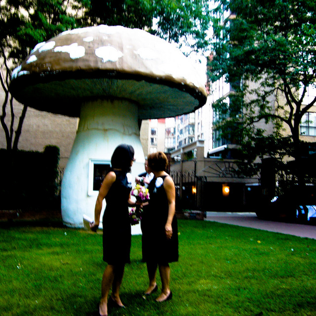 Looking behind them, a large mushroom