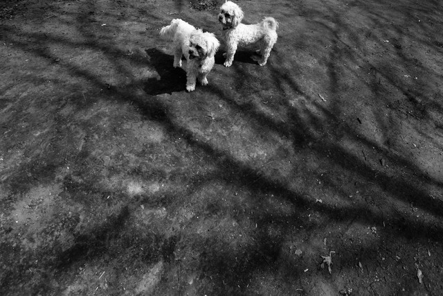 Lucy and Max at High Park