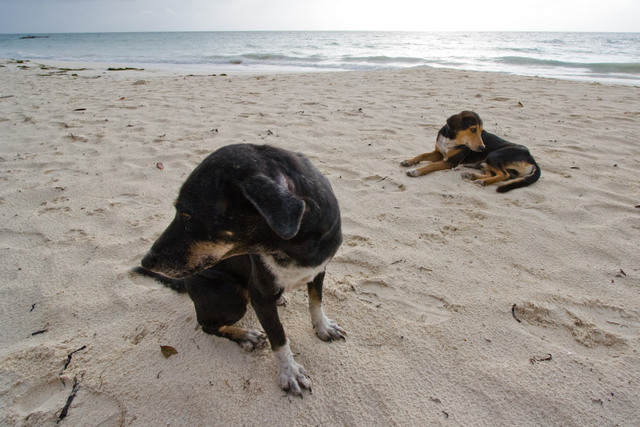 Tamarind Beach Dogs