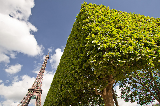 Tour Eiffel and Squared Tree